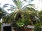 Location Villa El Mouradia Alger